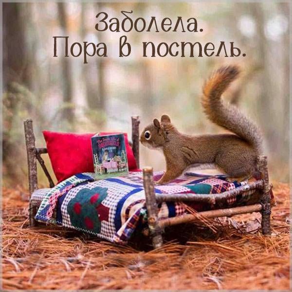 Картинка белка болеет - скачать бесплатно на otkrytkivsem.ru