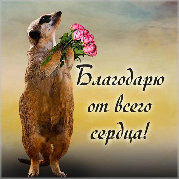 Картинка благодарю прикольная с надписью - скачать бесплатно на otkrytkivsem.ru