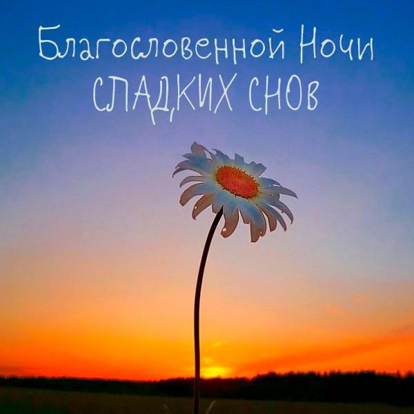 Картинка благословенной ночи сладких снов - скачать бесплатно на otkrytkivsem.ru