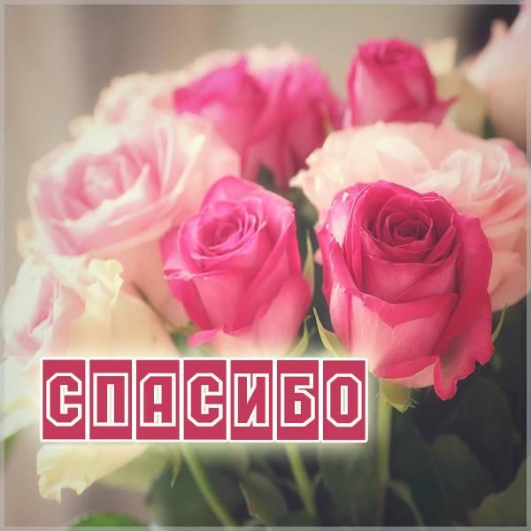 Картинка букет роз спасибо - скачать бесплатно на otkrytkivsem.ru