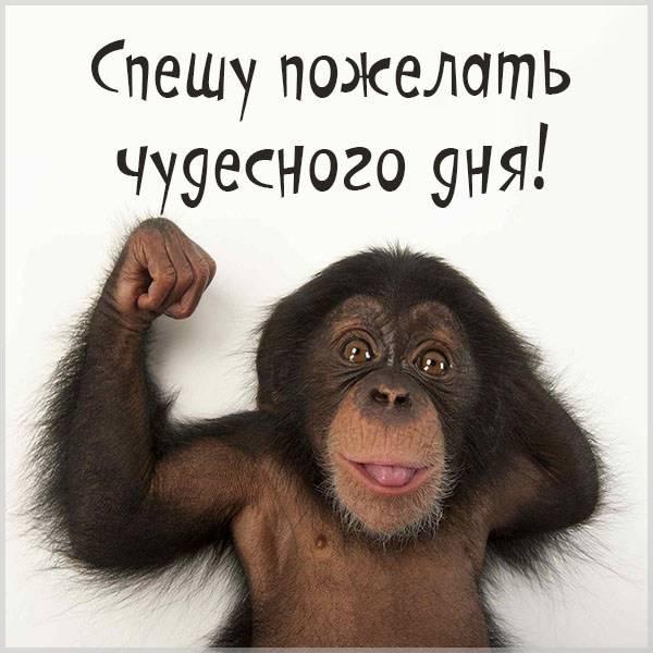 Картинка чудесного дня другу - скачать бесплатно на otkrytkivsem.ru