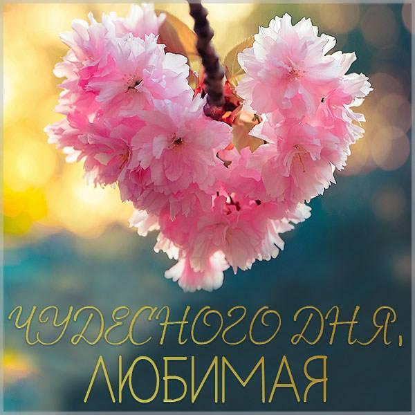 Картинка чудесного дня любимая - скачать бесплатно на otkrytkivsem.ru