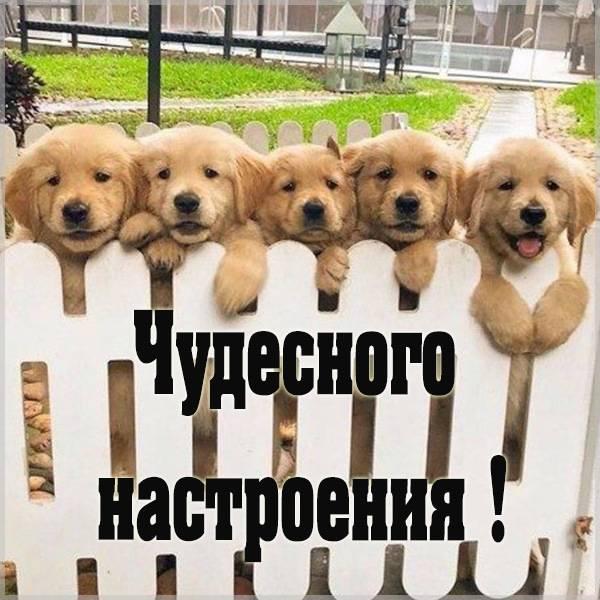 Картинка чудесного настроения красивая с надписью - скачать бесплатно на otkrytkivsem.ru