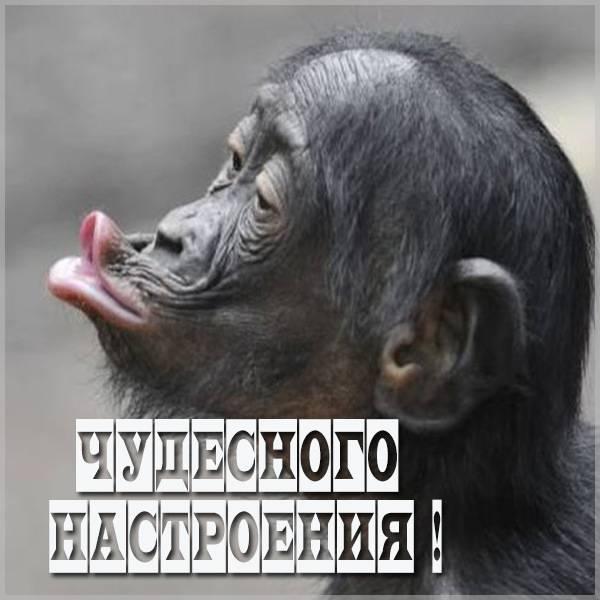 Картинка чудесного настроения прикольная - скачать бесплатно на otkrytkivsem.ru