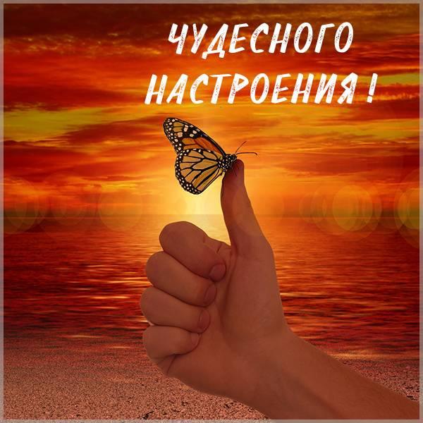 Картинка чудесного настроения с бабочками - скачать бесплатно на otkrytkivsem.ru