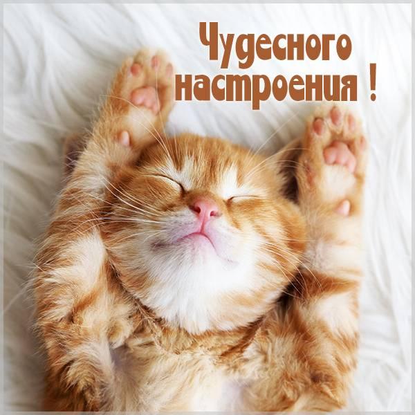 Картинка чудесного настроения смешная - скачать бесплатно на otkrytkivsem.ru