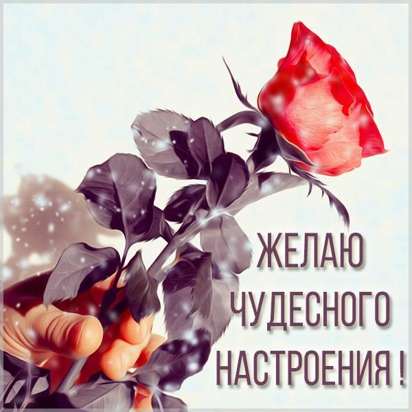 Картинка чудесного настроения женщине - скачать бесплатно на otkrytkivsem.ru