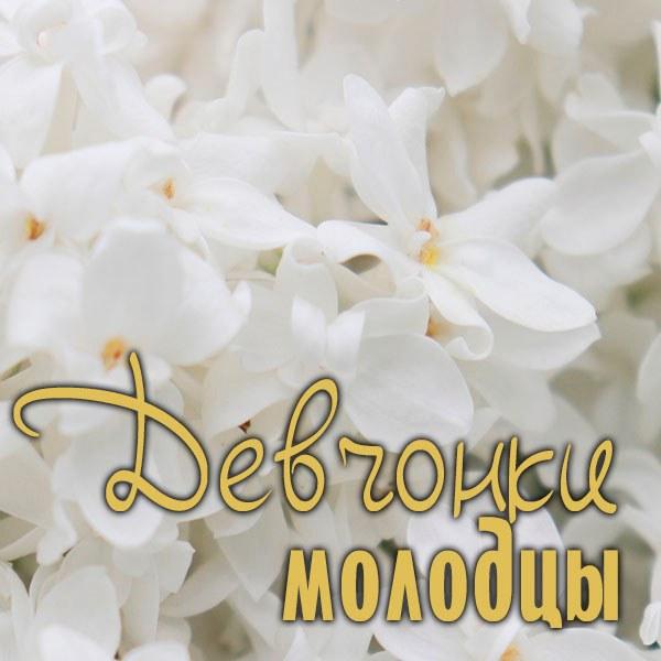 Картинка девчонки молодцы - скачать бесплатно на otkrytkivsem.ru