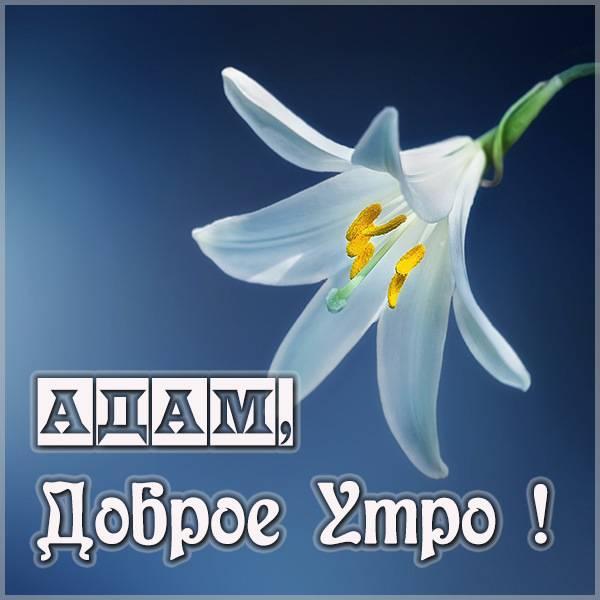 Картинка доброе утро Адам - скачать бесплатно на otkrytkivsem.ru
