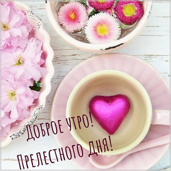 Картинка доброе утро хорошего дня нежная - скачать бесплатно на otkrytkivsem.ru