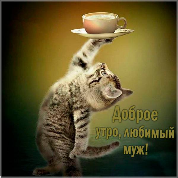 Картинка доброе утро любимый муж прикольная - скачать бесплатно на otkrytkivsem.ru
