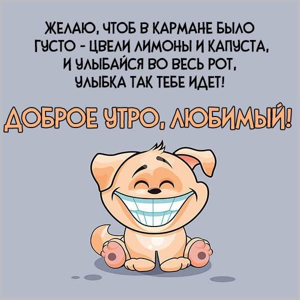 Картинка доброе утро любимый прикольная смешная - скачать бесплатно на otkrytkivsem.ru
