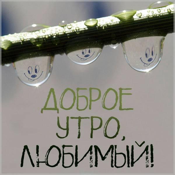 Картинка доброе утро любимый смешная с надписью - скачать бесплатно на otkrytkivsem.ru