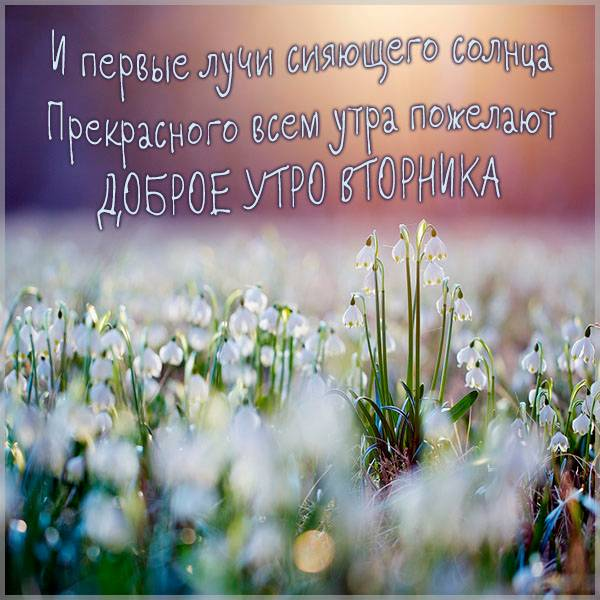 Картинка доброе утро прекрасного дня вторник - скачать бесплатно на otkrytkivsem.ru