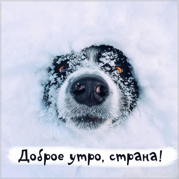 Картинка доброе утро страна смешная - скачать бесплатно на otkrytkivsem.ru