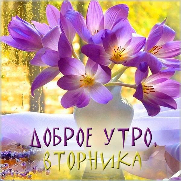 Картинка доброе утро вторника необычная - скачать бесплатно на otkrytkivsem.ru