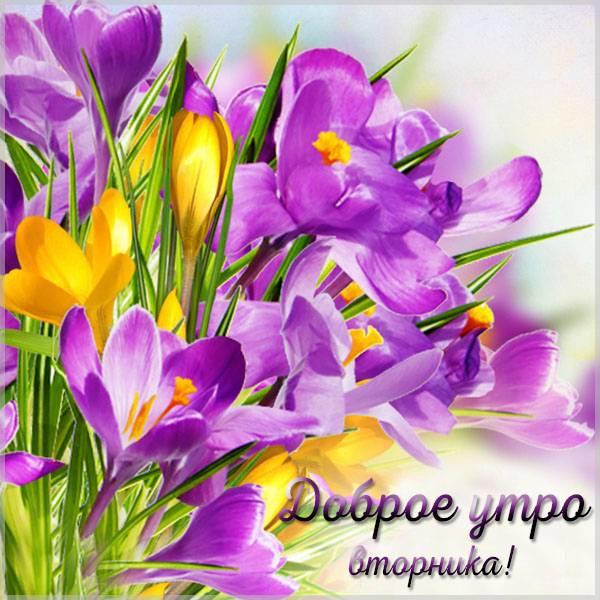 Картинка доброе утро вторника - скачать бесплатно на otkrytkivsem.ru