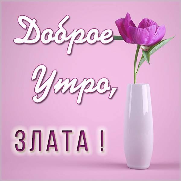 Картинка доброе утро Злата - скачать бесплатно на otkrytkivsem.ru