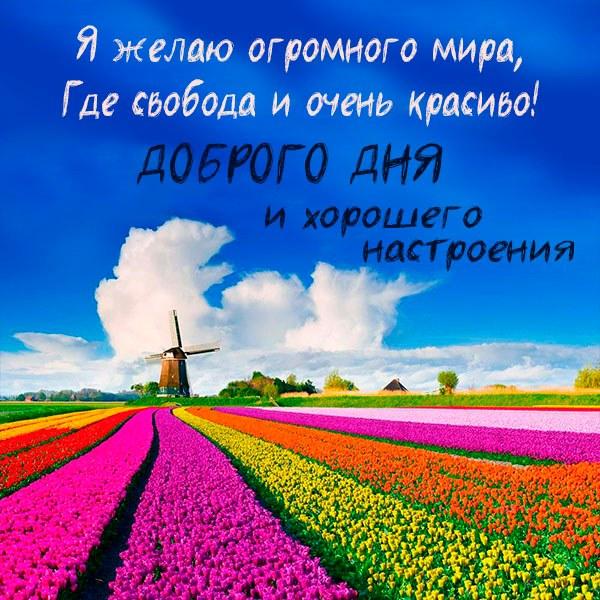 Картинка доброго дня и хорошего настроения стильная - скачать бесплатно на otkrytkivsem.ru