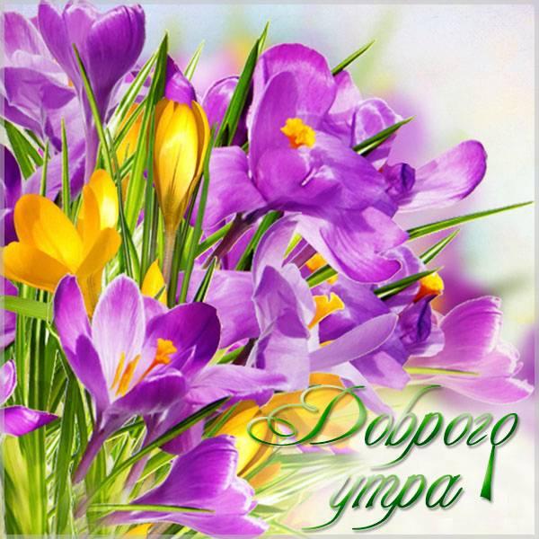 Картинка доброго утра красивая для женщины - скачать бесплатно на otkrytkivsem.ru