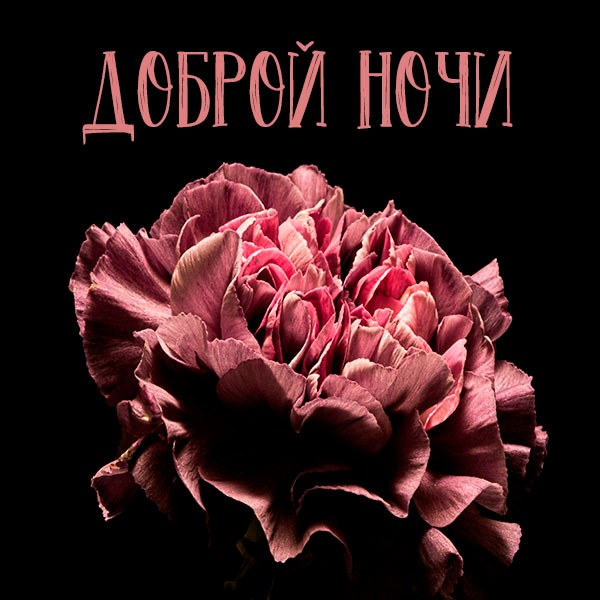 Картинка доброй ночи красивая для девушки - скачать бесплатно на otkrytkivsem.ru