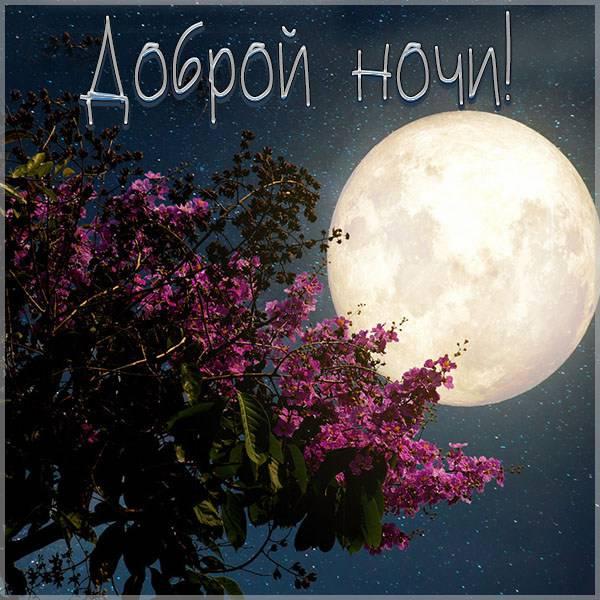 Картинка доброй ночи природа - скачать бесплатно на otkrytkivsem.ru