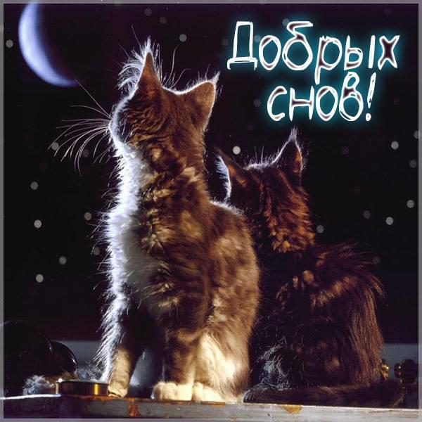Картинка добрых снов с кошками - скачать бесплатно на otkrytkivsem.ru