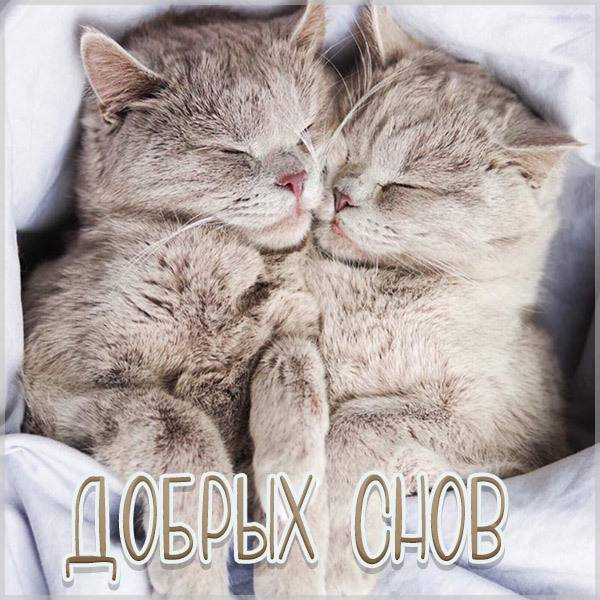Картинка добрых снов с котятами - скачать бесплатно на otkrytkivsem.ru