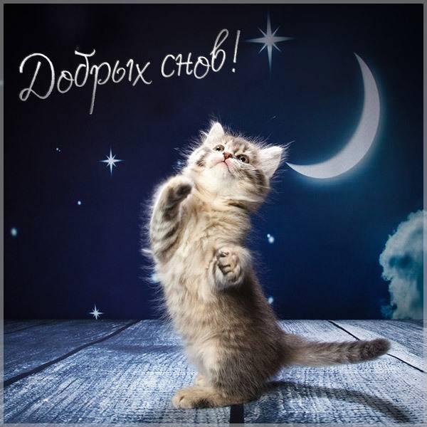Картинка добрых снов с животными - скачать бесплатно на otkrytkivsem.ru