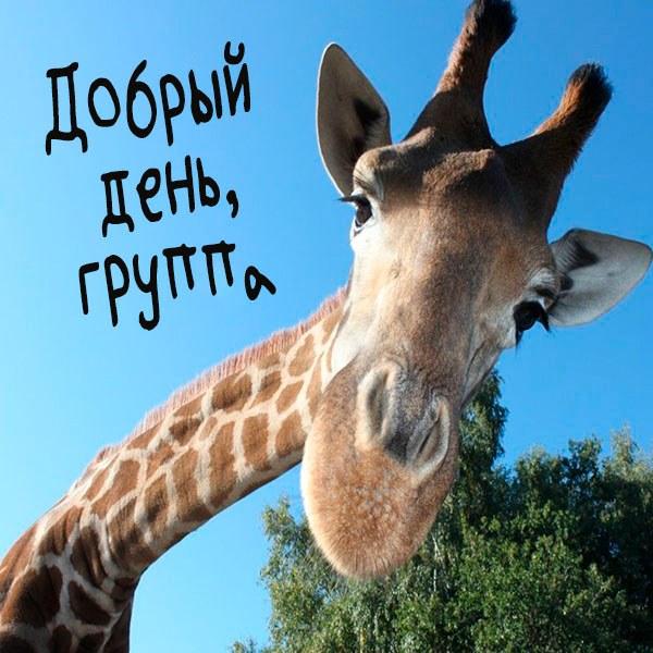 Картинка добрый день группа прикольная - скачать бесплатно на otkrytkivsem.ru