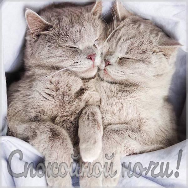 Картинка электронная со словами спокойной ночи - скачать бесплатно на otkrytkivsem.ru