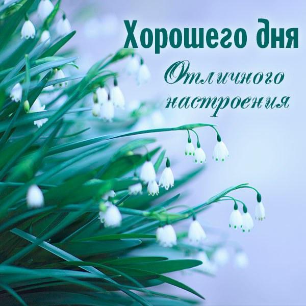 Картинка хорошего дня и отличного настроения новая - скачать бесплатно на otkrytkivsem.ru