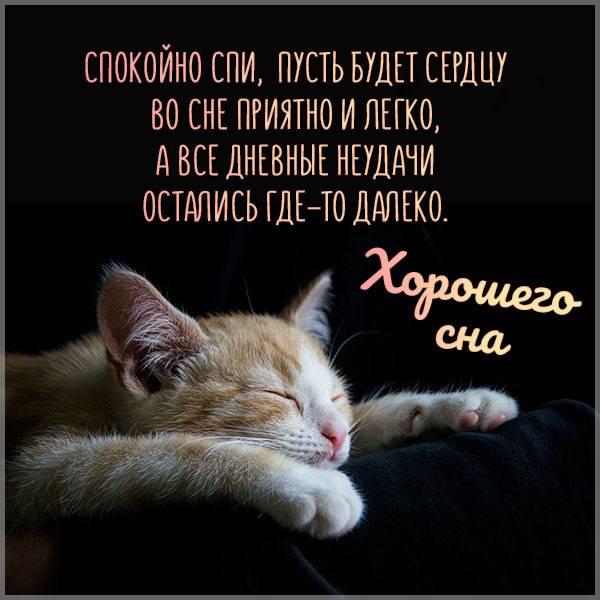 Картинка хорошего сна смешная - скачать бесплатно на otkrytkivsem.ru