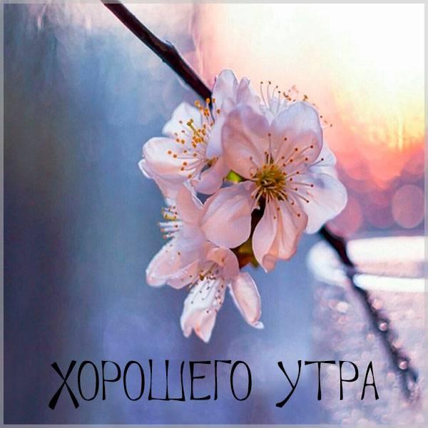 Картинка хорошего утра с надписью - скачать бесплатно на otkrytkivsem.ru