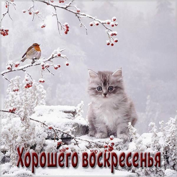 Картинка хорошего воскресенья зима - скачать бесплатно на otkrytkivsem.ru