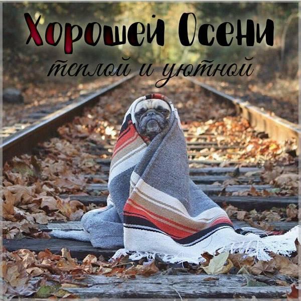 Картинка хорошей осени прикольная - скачать бесплатно на otkrytkivsem.ru