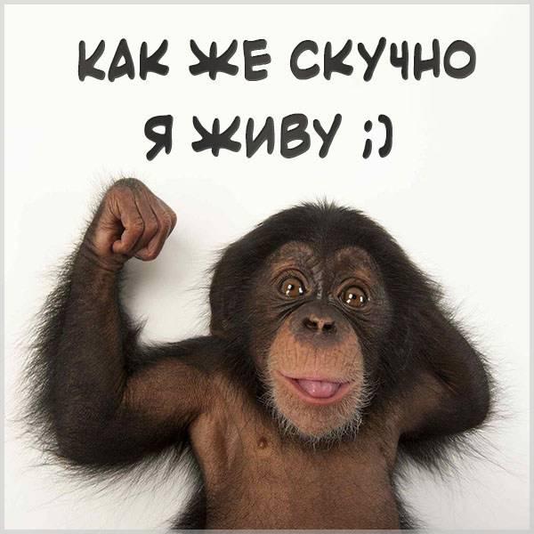 Картинка как же скучно я живу - скачать бесплатно на otkrytkivsem.ru