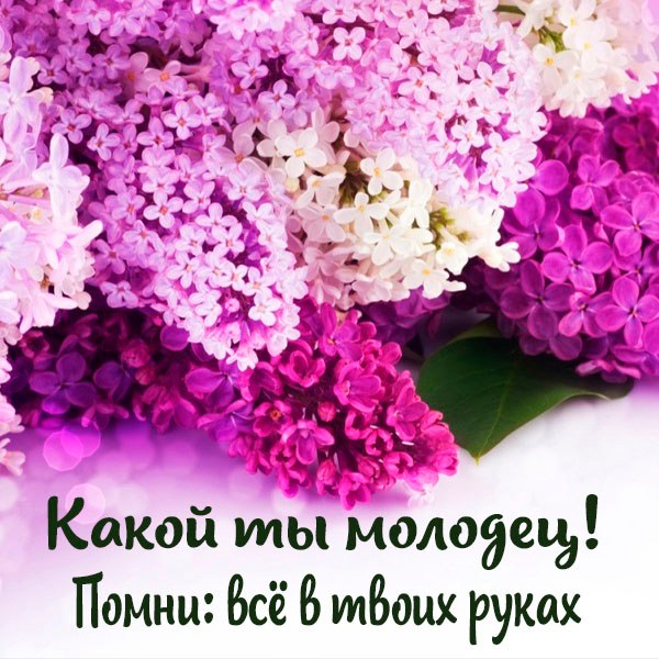 Картинка какой ты молодец - скачать бесплатно на otkrytkivsem.ru
