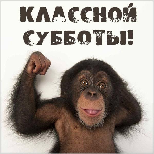 Картинка классной субботы прикольная - скачать бесплатно на otkrytkivsem.ru