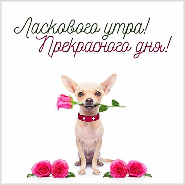 Картинка ласкового утра и прекрасного дня - скачать бесплатно на otkrytkivsem.ru
