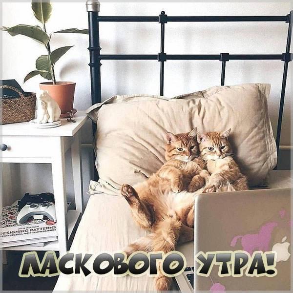 Картинка ласкового утра прикольная - скачать бесплатно на otkrytkivsem.ru