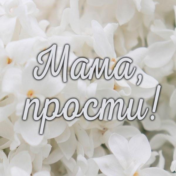 Картинка мама прости - скачать бесплатно на otkrytkivsem.ru