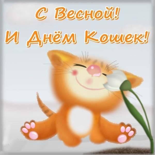 Картинка на день кошек 1 марта - скачать бесплатно на otkrytkivsem.ru