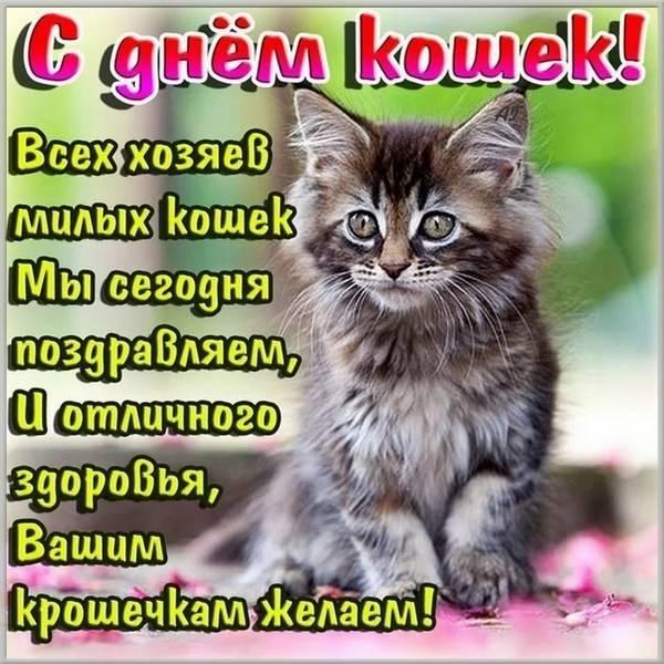 Картинка на день кошек 2019 - скачать бесплатно на otkrytkivsem.ru