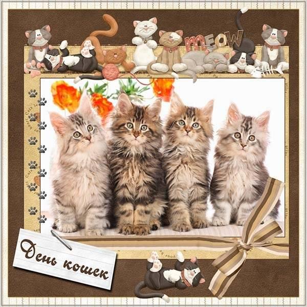 Картинка на день кошек 8 августа - скачать бесплатно на otkrytkivsem.ru