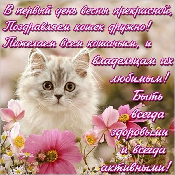 Картинка на день кошек с поздравлением - скачать бесплатно на otkrytkivsem.ru