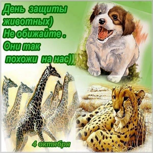 Картинка на день защиты животных 4 октября - скачать бесплатно на otkrytkivsem.ru