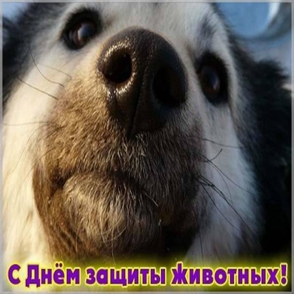 Картинка на день защиты животных - скачать бесплатно на otkrytkivsem.ru
