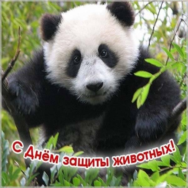 Картинка на день животных с приколом - скачать бесплатно на otkrytkivsem.ru