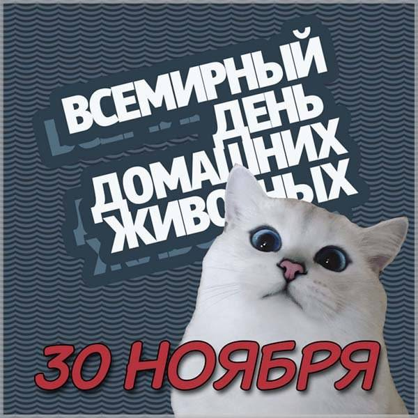 Картинка на международный день домашних животных - скачать бесплатно на otkrytkivsem.ru